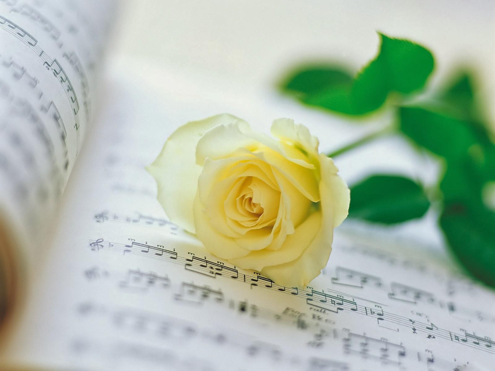 Hoa hồng trắng trên tập âm nhạc