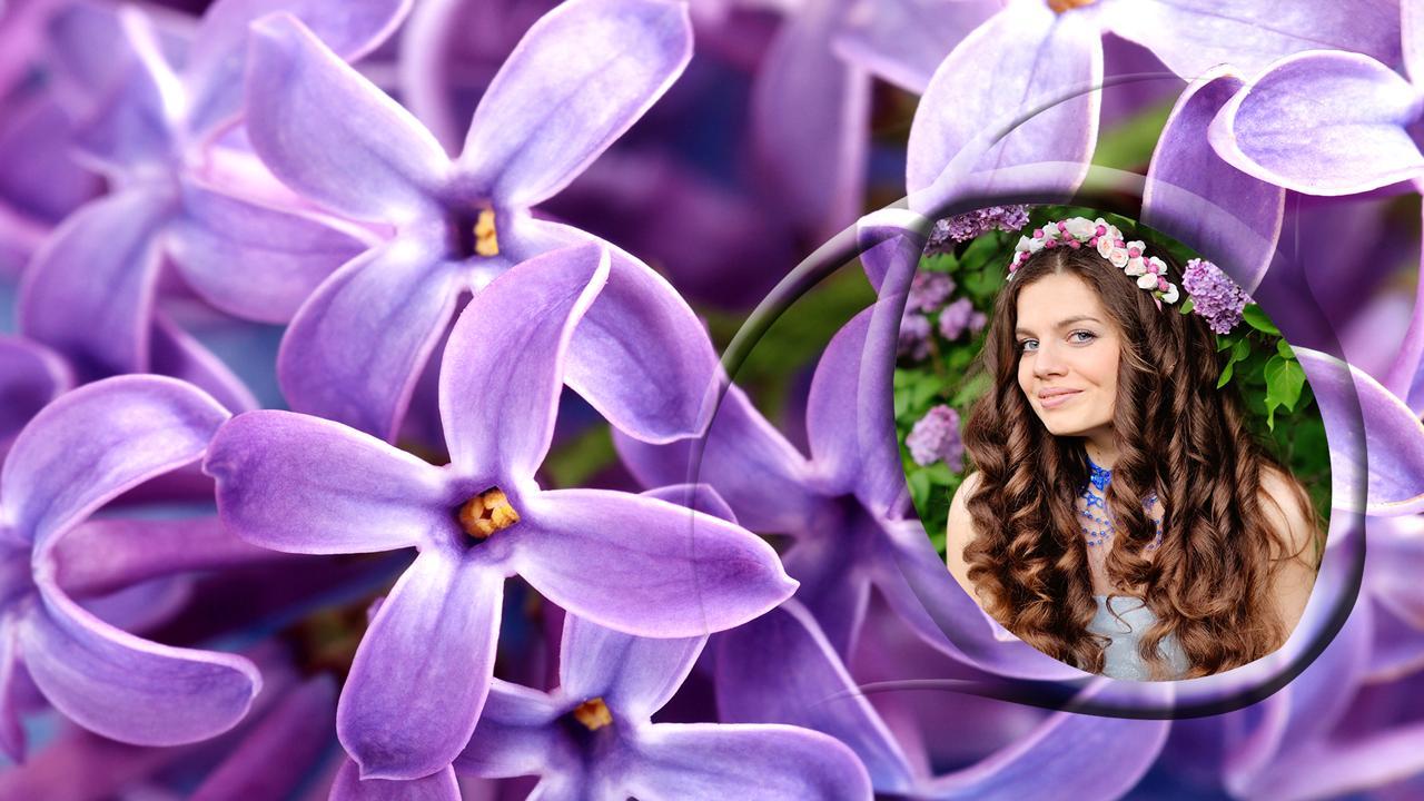 Hoa tử đinh hương tím thật đẹp
