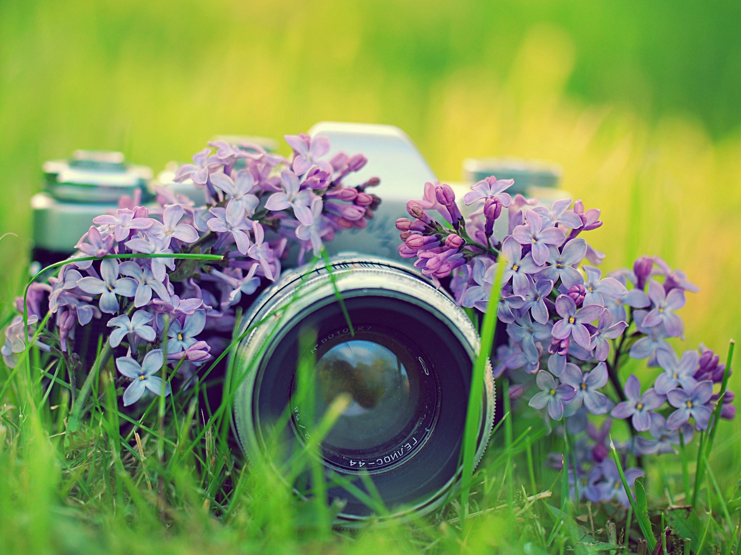 Hoa tử đinh hương và máy ảnh