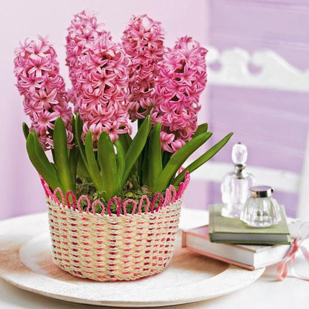 Lẵng hoa tiên ông màu hồng