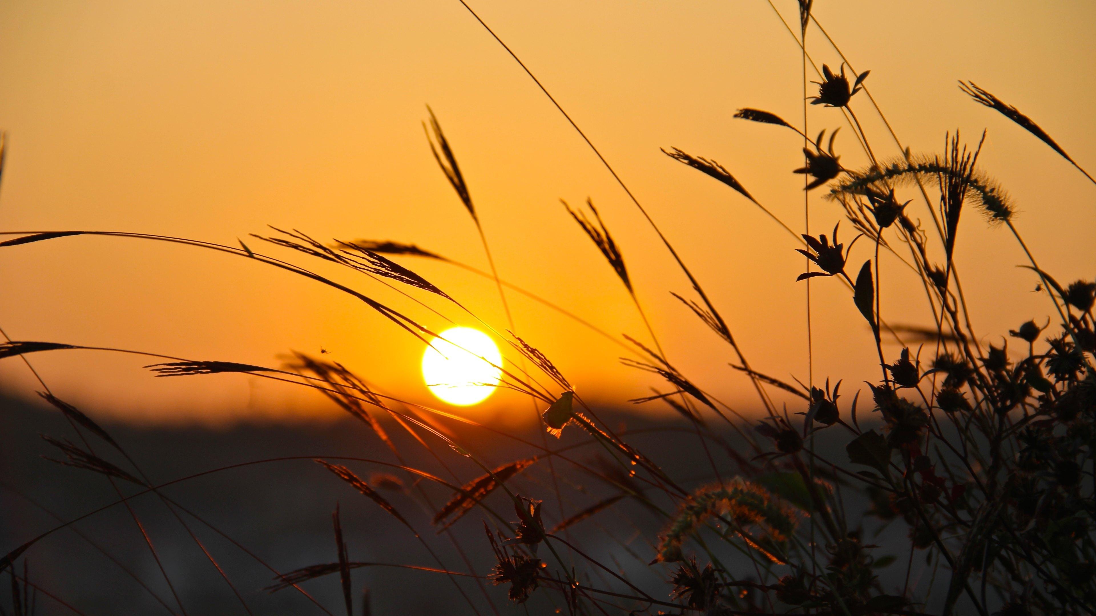 Mặt trời vàng tươi vào ngày mùa hè