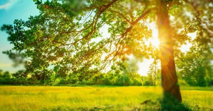 Mùa hè nắng vàng tươi