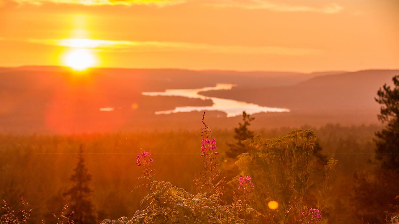 Mùa hè tới nắng vàng rực rỡ trên rừng