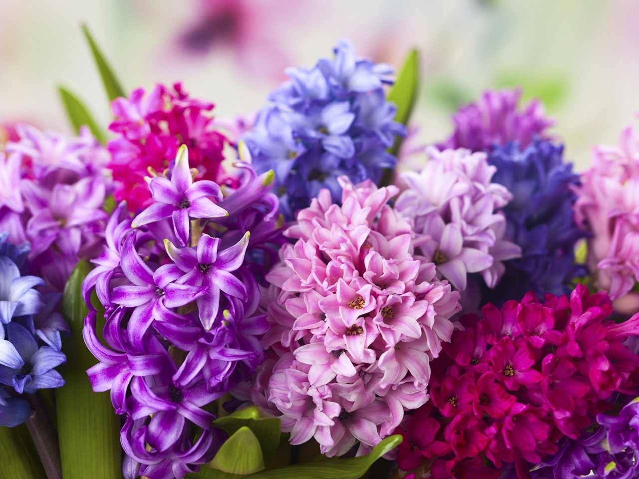 Những bông hoa tiên ông đa sắc nhiều màu