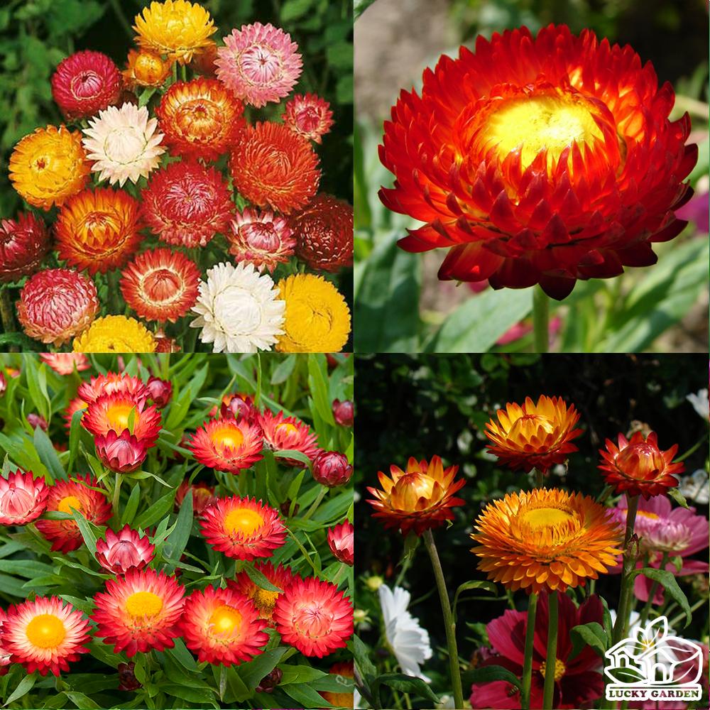 Những bức ảnh hoa bất tử cực đẹp
