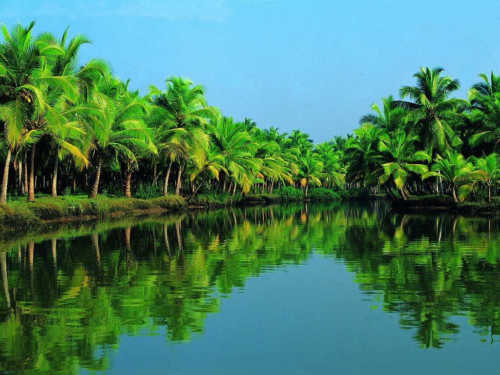 Những cây dừa mọc san sát nhau quanh hồ
