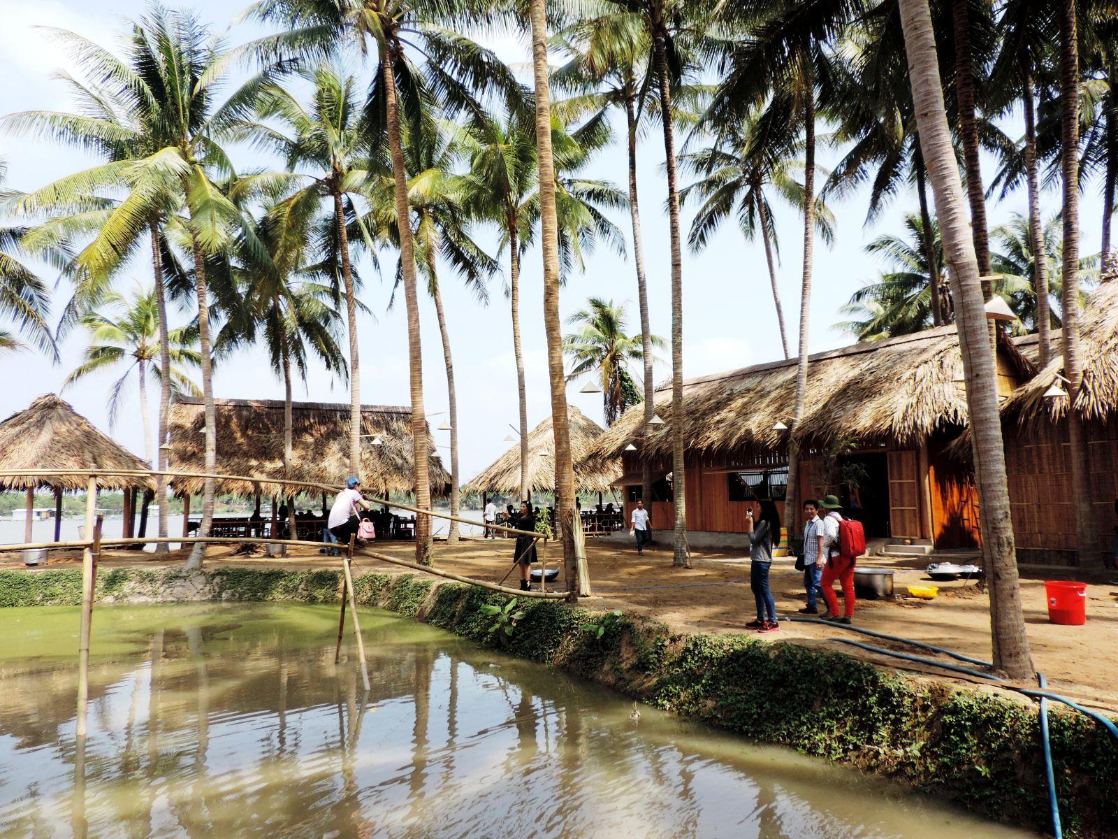 Những cây dừa ở vùng biểu du lịch quê mình