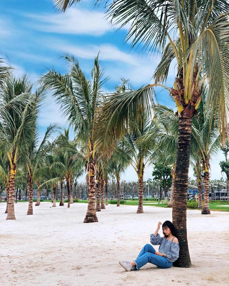 Những hàng dừa cảnh được trồng trên cát trắng