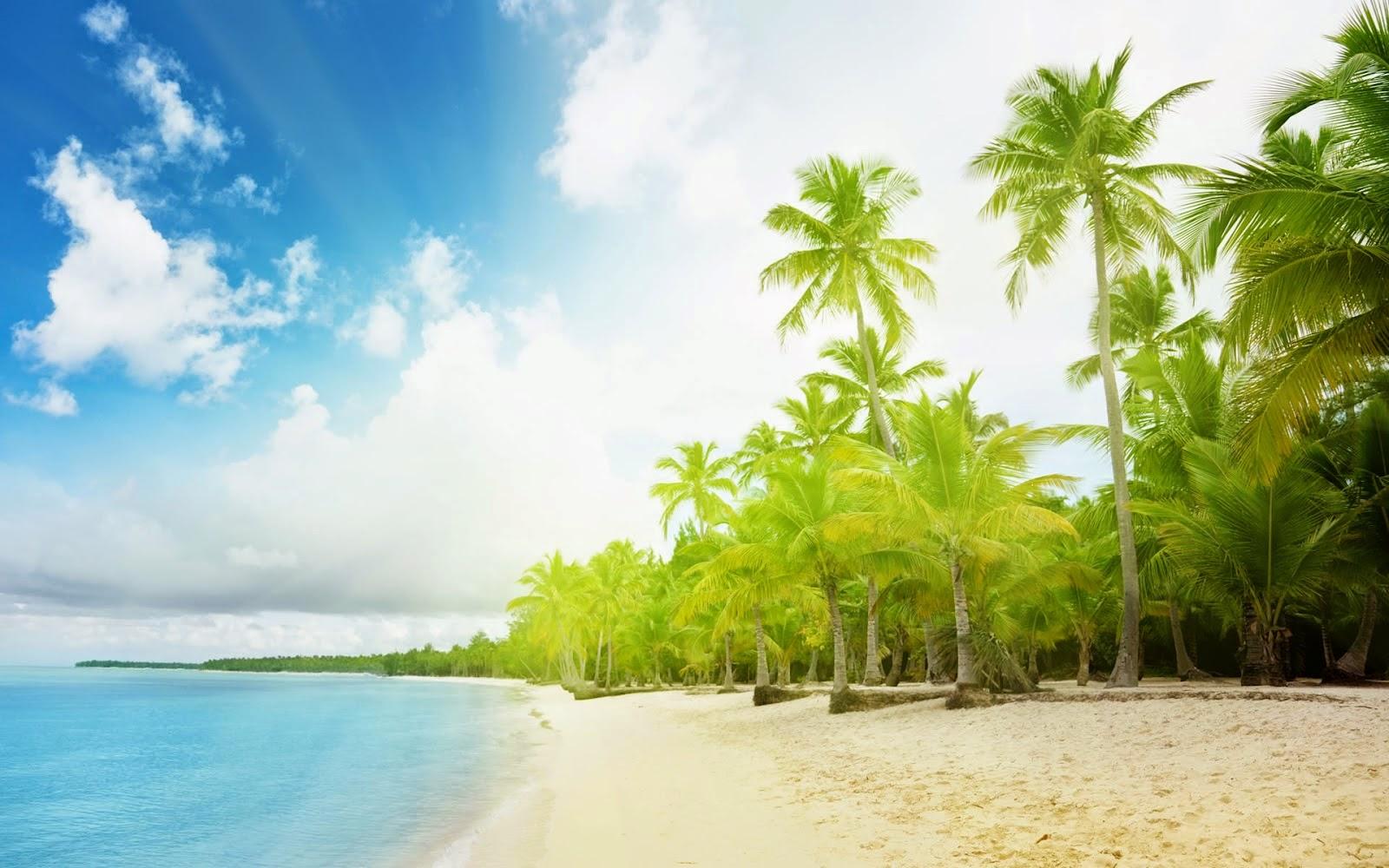Thiên nhiên tươi đẹp với biển xanh cát trắng và rặng dừa biển