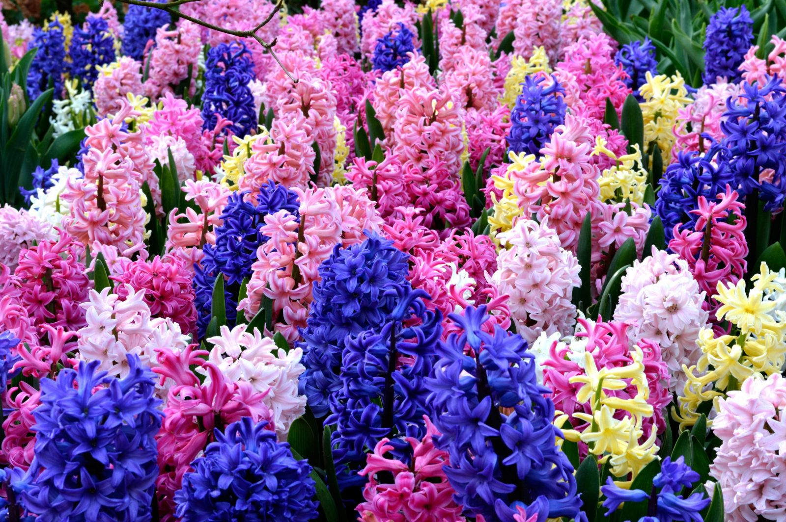 Vườn trồng nhiều hoa tiên ông khác nhau