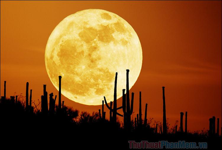 Ánh trăng vàng