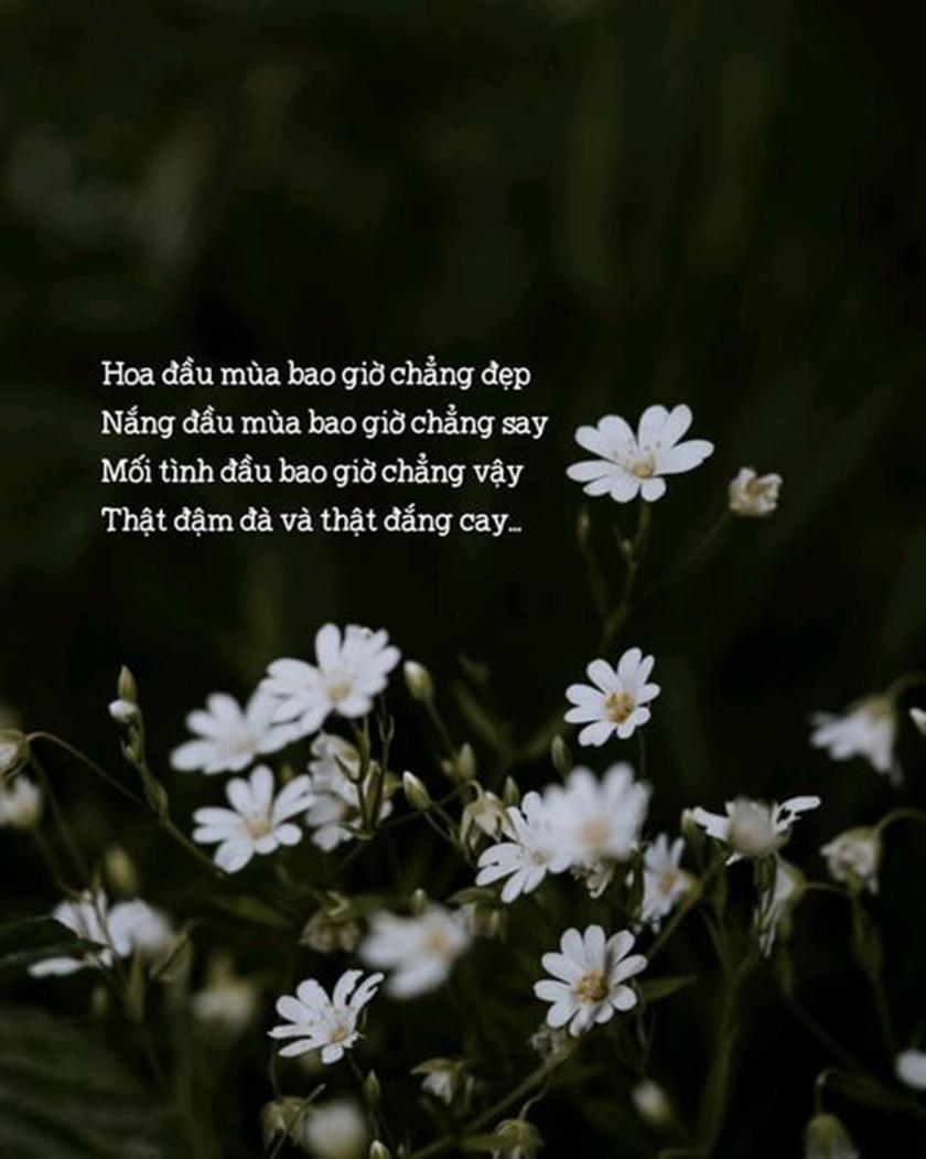 Hình ảnh quotes buồn đẹp nhất