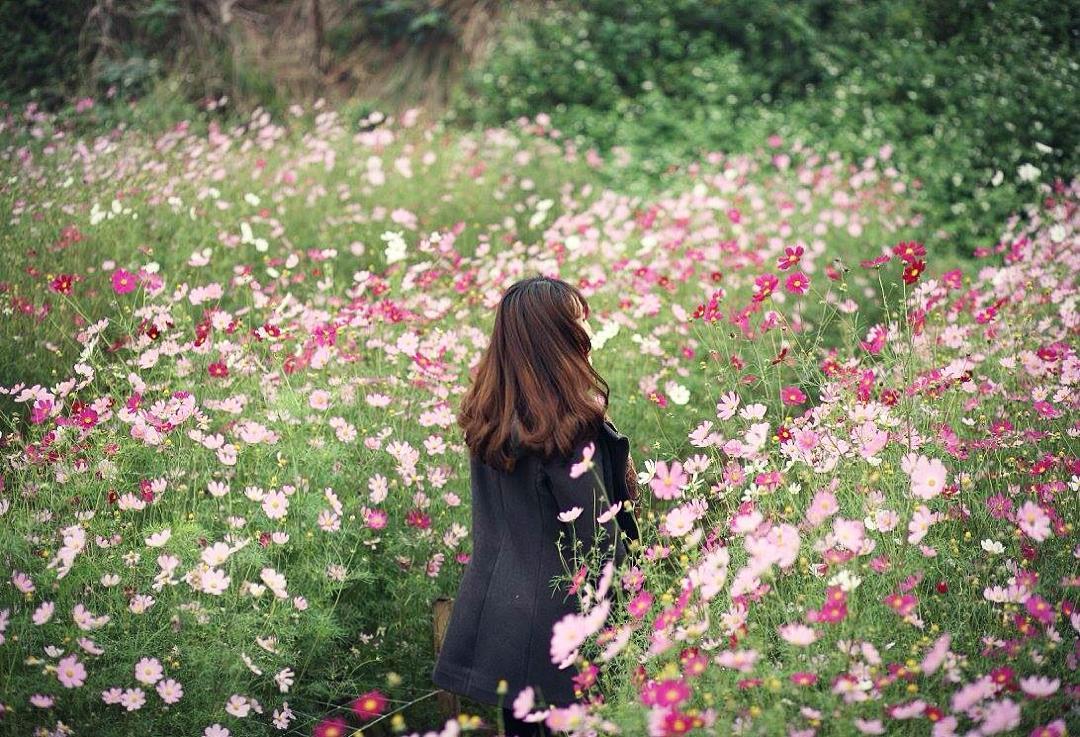 Ảnh cánh đồng hoa bướm đẹp