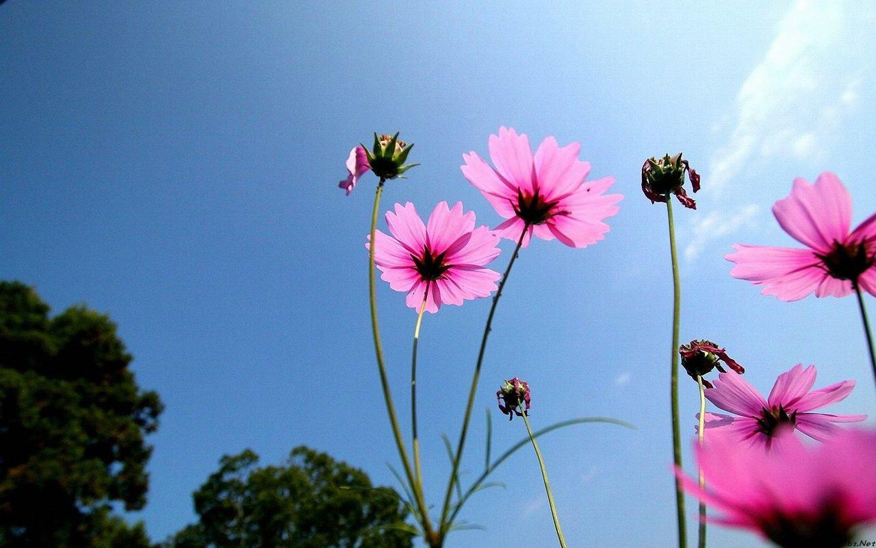 Hình ảnh hoa cánh bướm đẹp và lãng mạn nhất