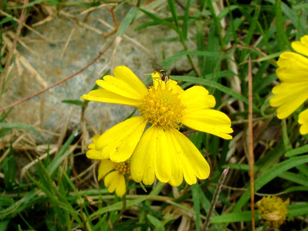 Hình ảnh hoa cánh bướm màu vàng đẹp nhất