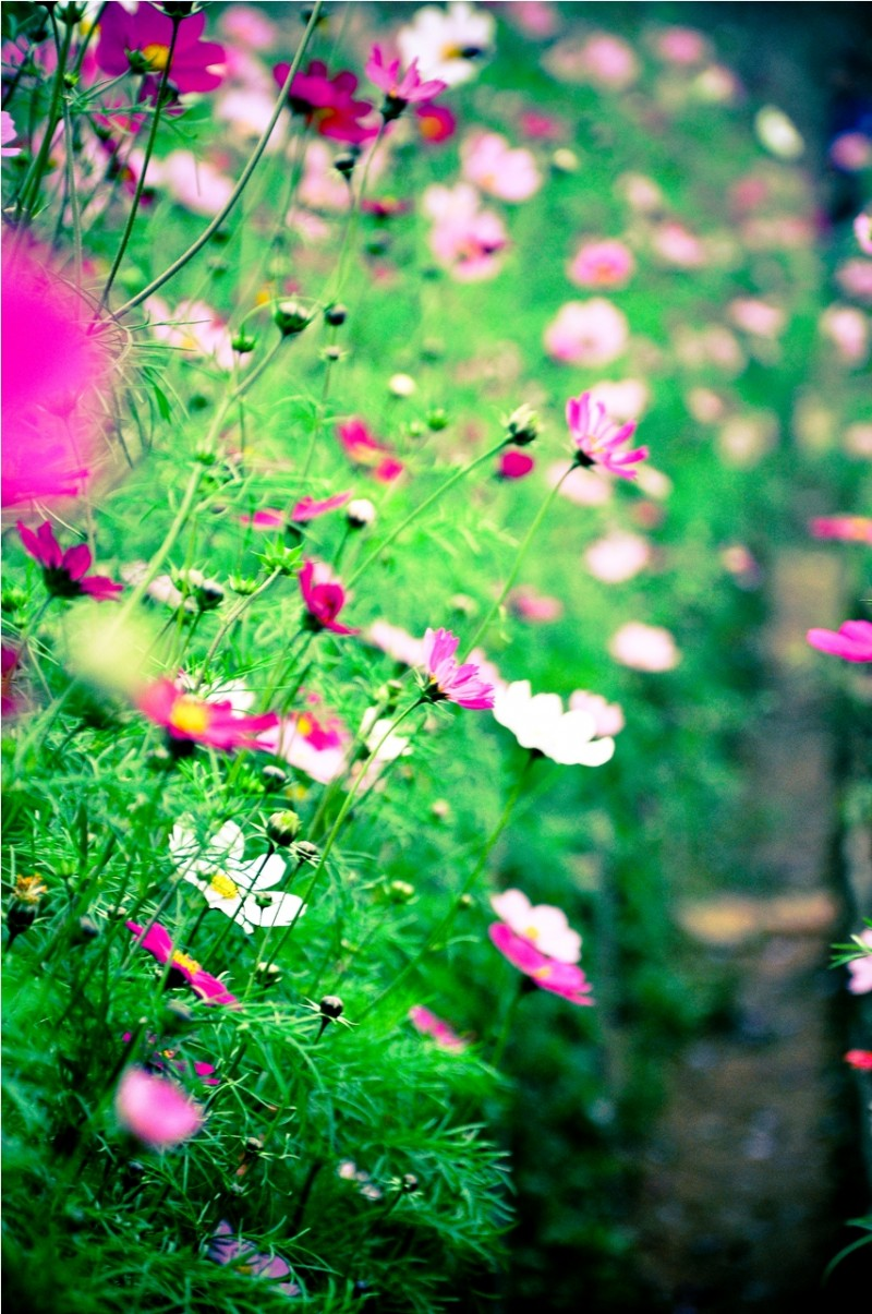 Hoa cánh bướm những hình ảnh đẹp nhất