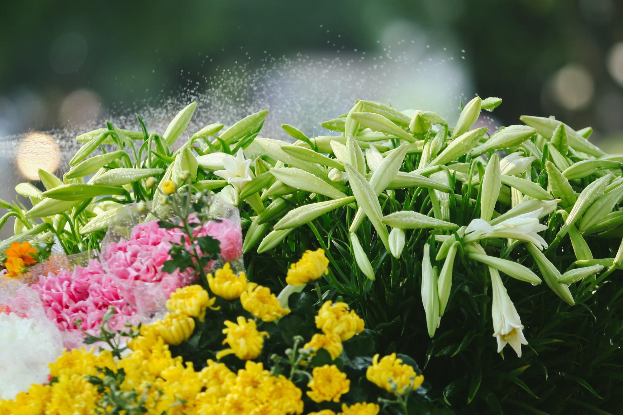 Ảnh đẹp hoa loa kèn trắng ngày Tết đẹp nhất