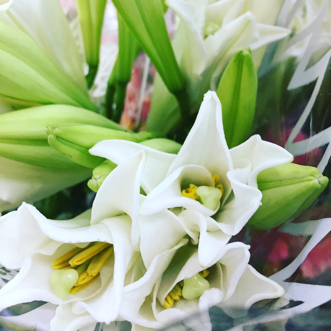 Ảnh đẹp hoa loa kèn trắng