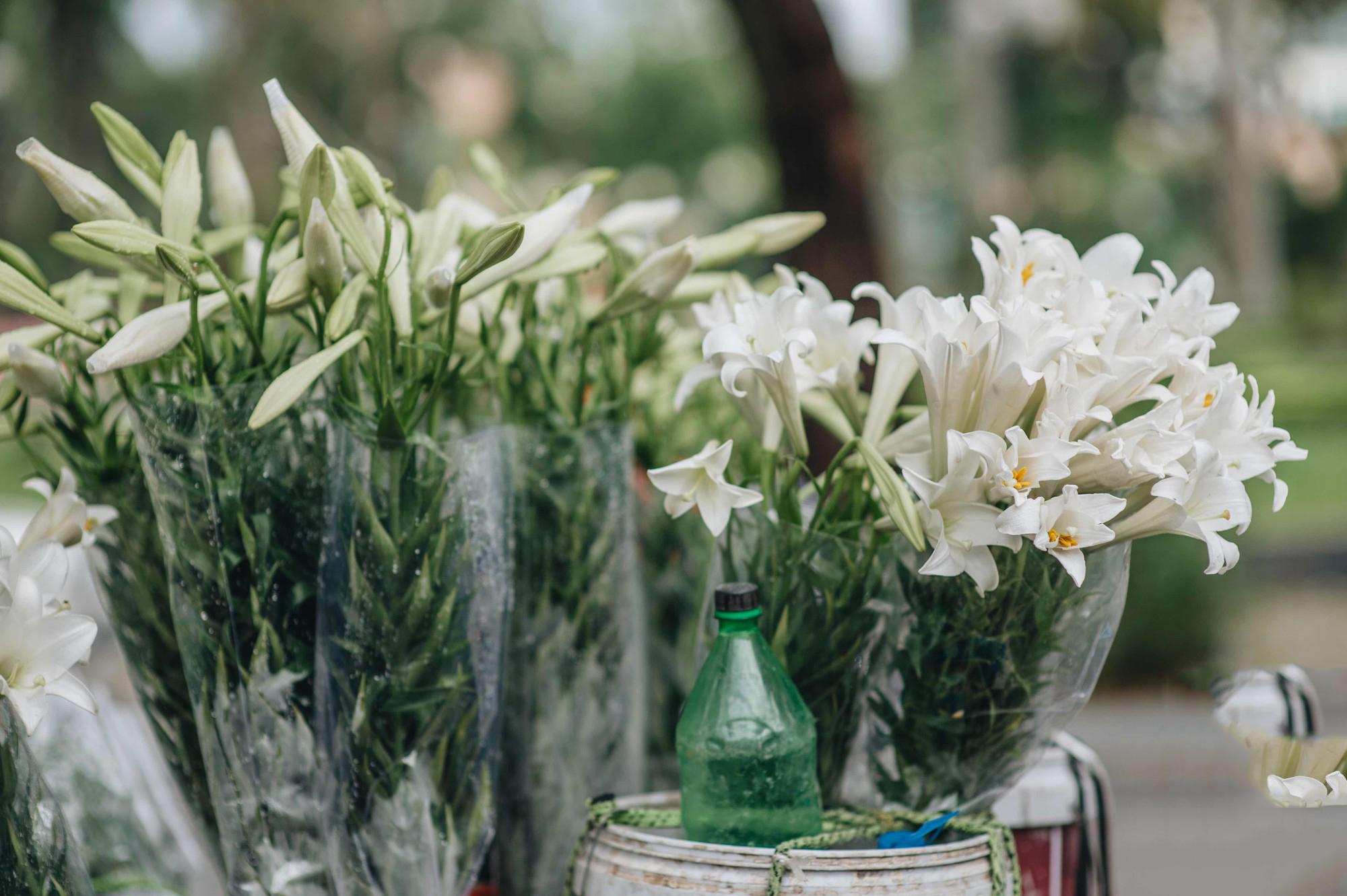 Ảnh hoa loa kèn Hà Nội đẹp nhất