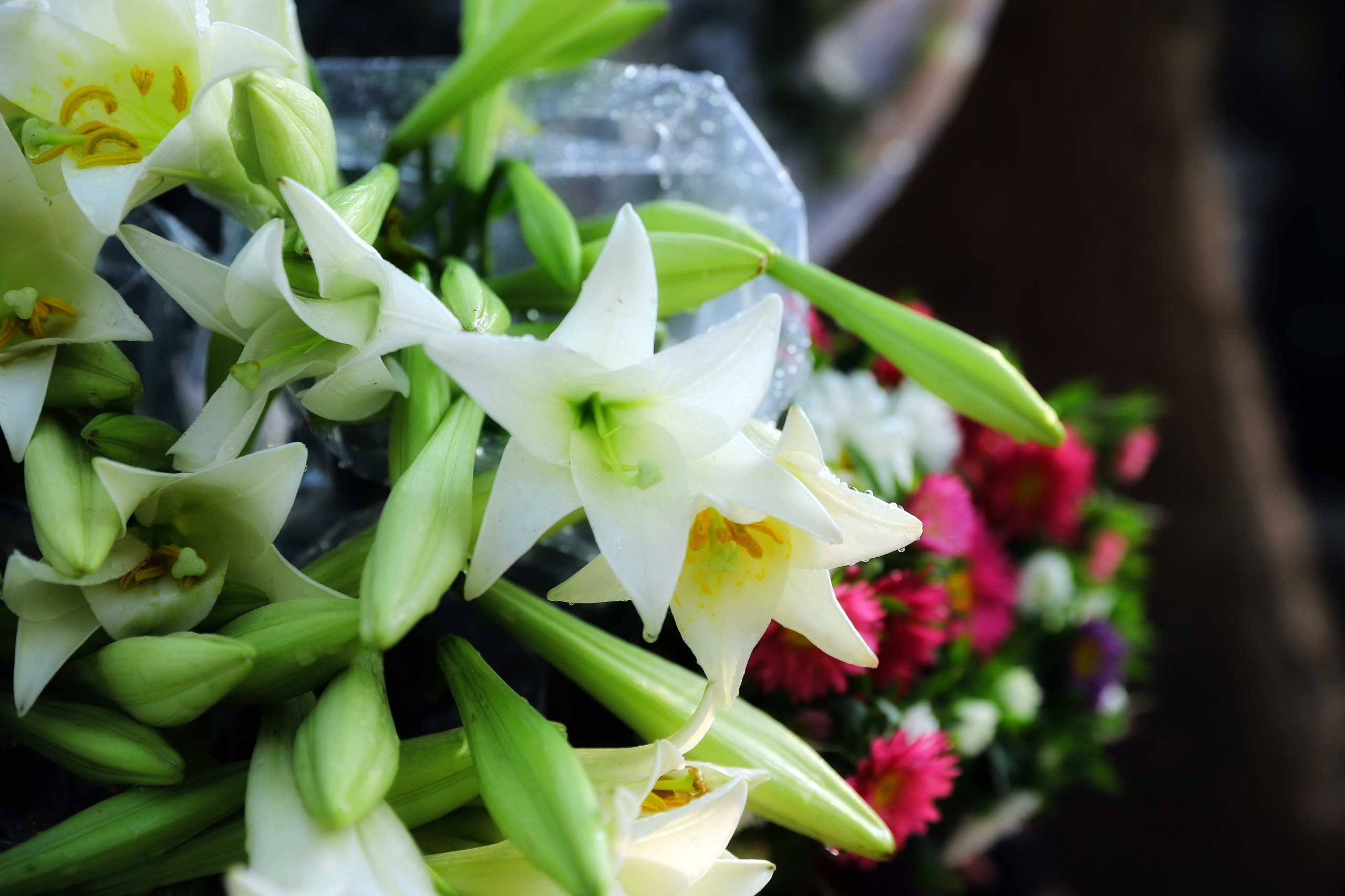 Ảnh hoa loa kèn trắng đẹp