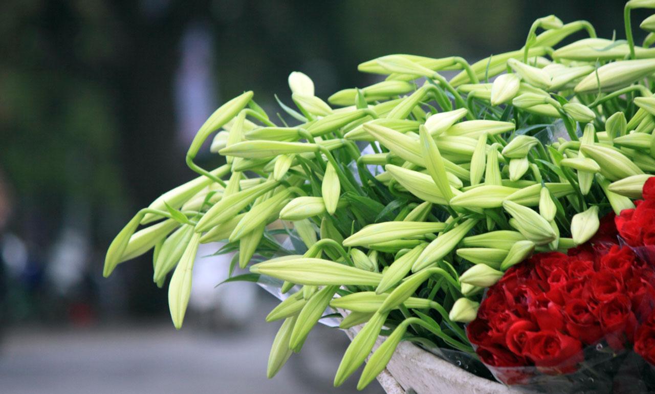 Ảnh hoa loa kèn trắng