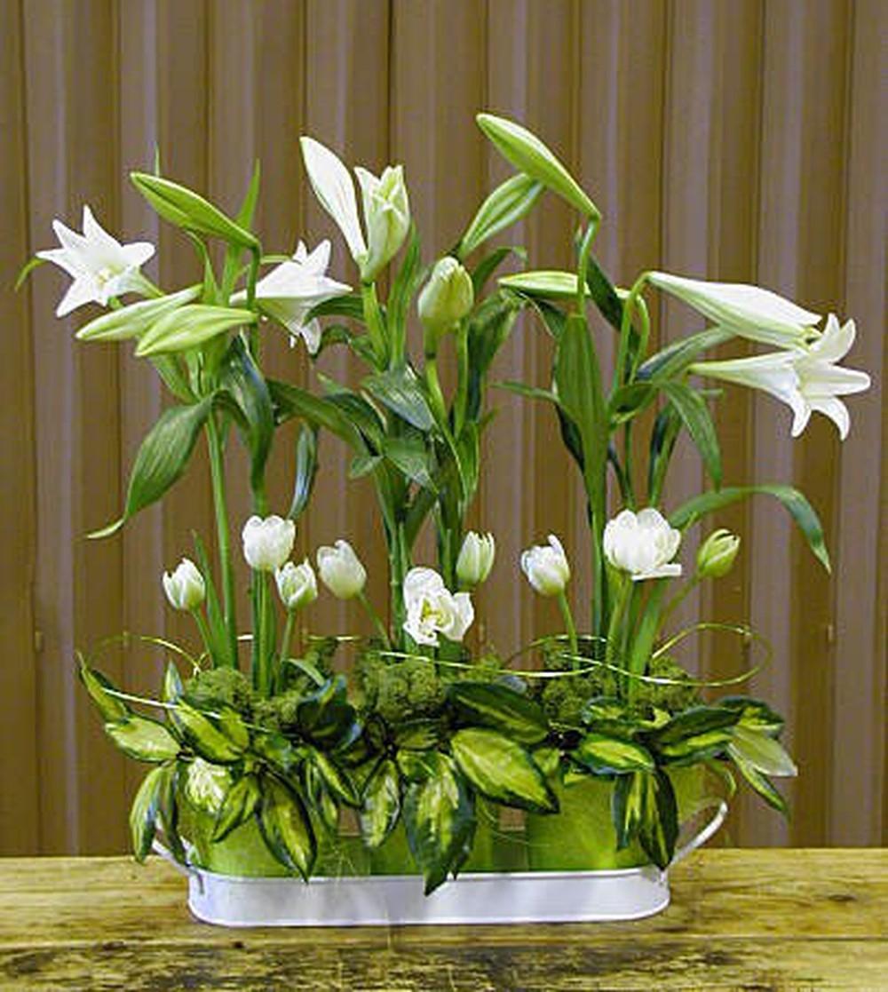 Hình ảnh chậu hoa loa kèn trắng đẹp nhất
