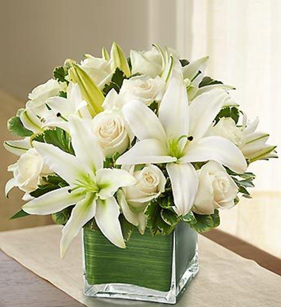 Tổng hợp những hình ảnh hoa loa kèn trắng đẹp nhất