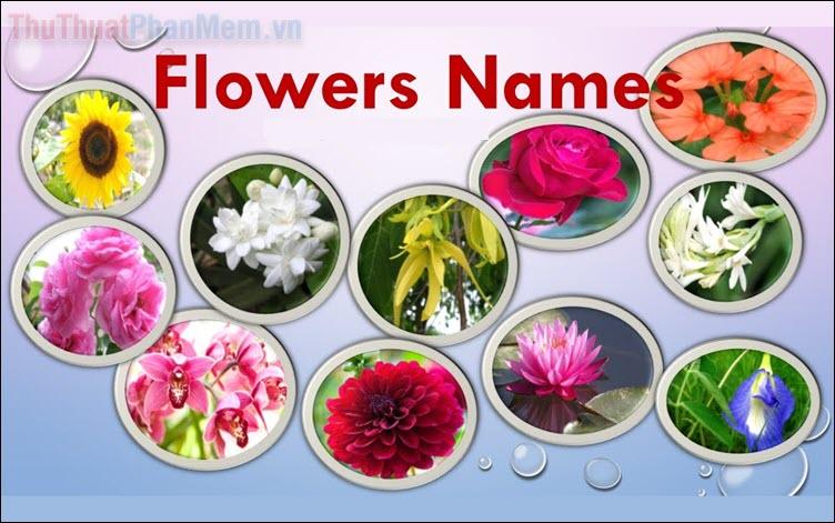 Tên các loài hoa bằng tiếng anh