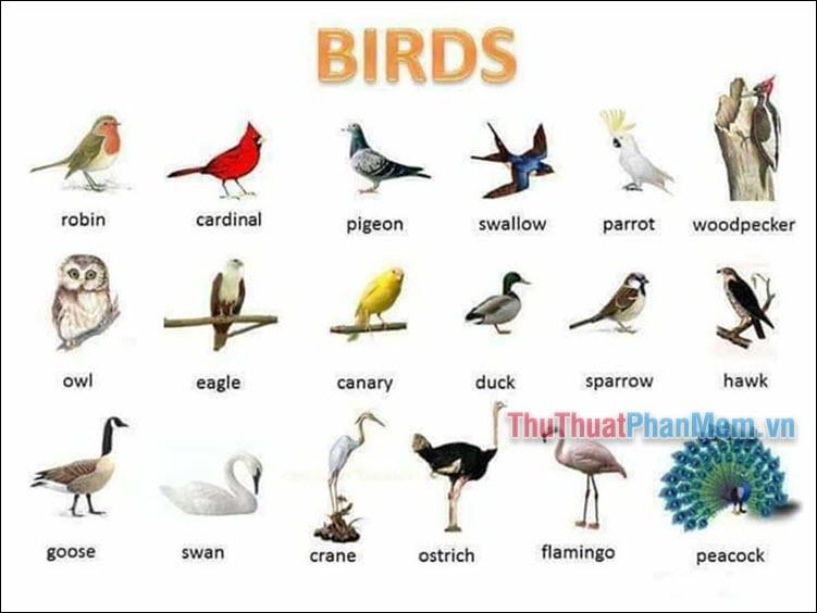 Từ vựng về các loại chim