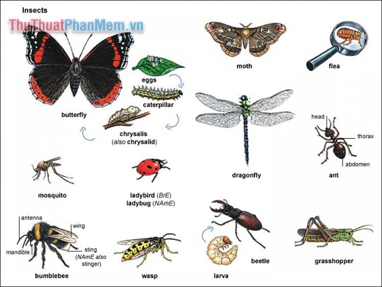 Từ vựng về các loại côn trùng thường gặp
