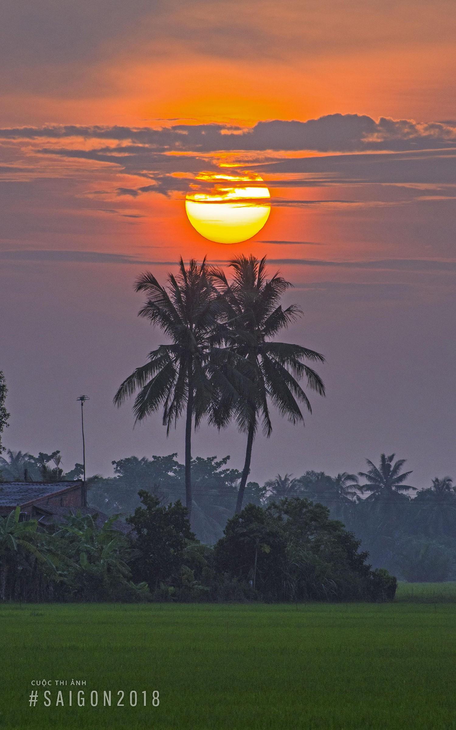 Ảnh bình minh ở quê hương Sài Gòn cây dừa cực đẹp