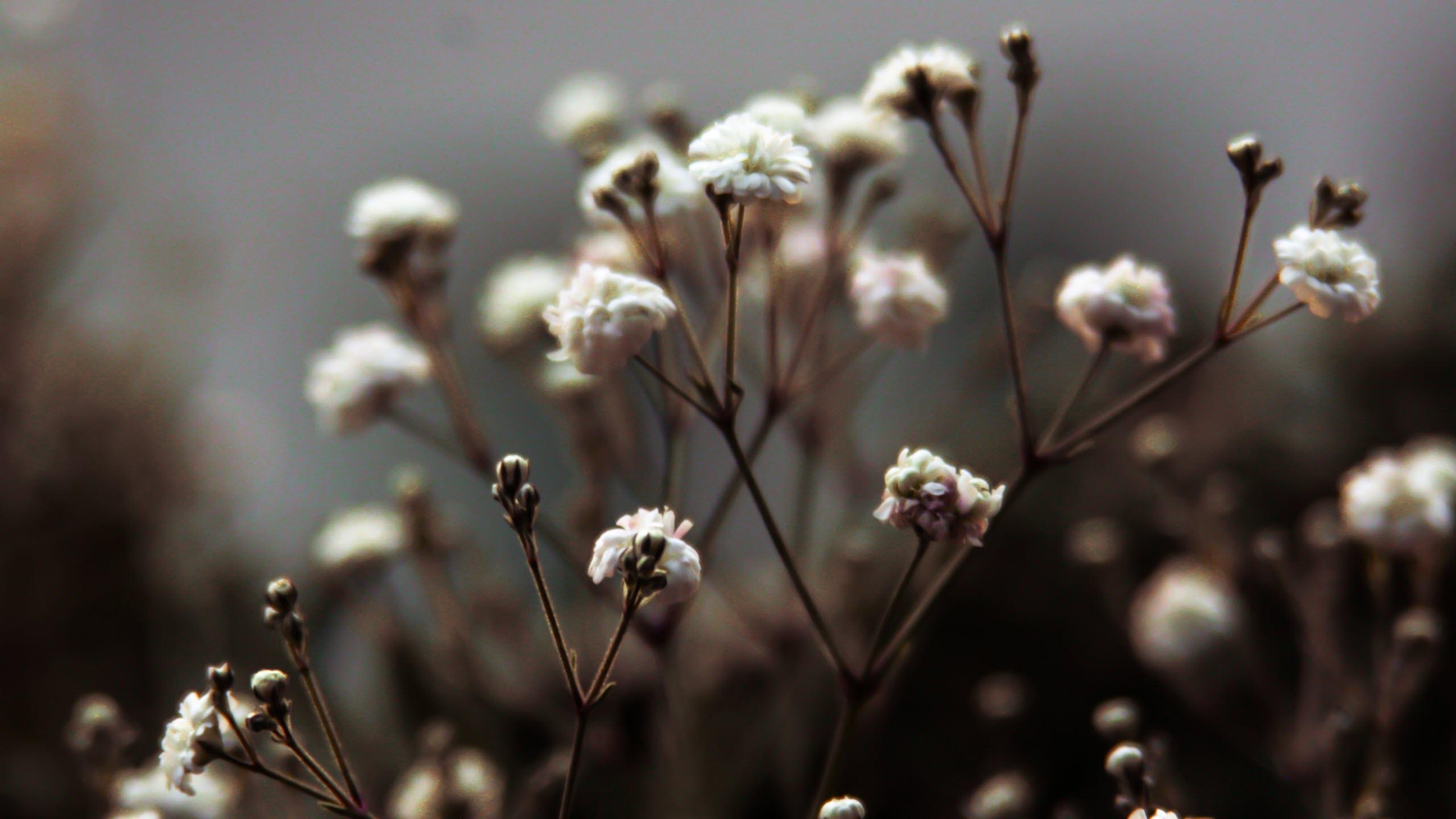 Hình nền hoa mua xuân cực đẹp