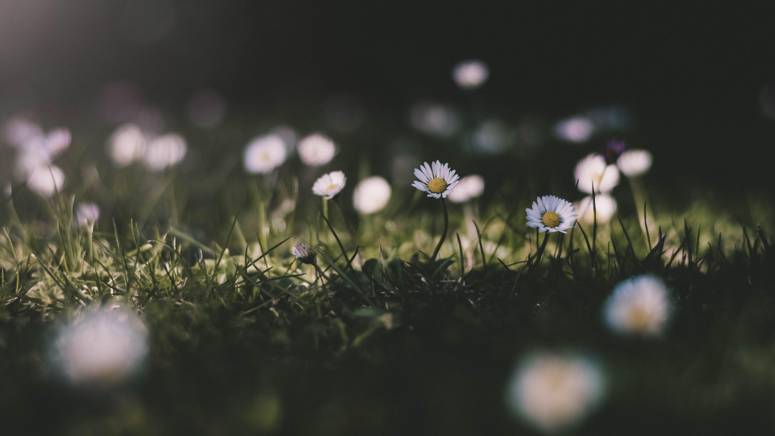 Hình nền hoa mùa xuân trong trẻo đẹp nhất