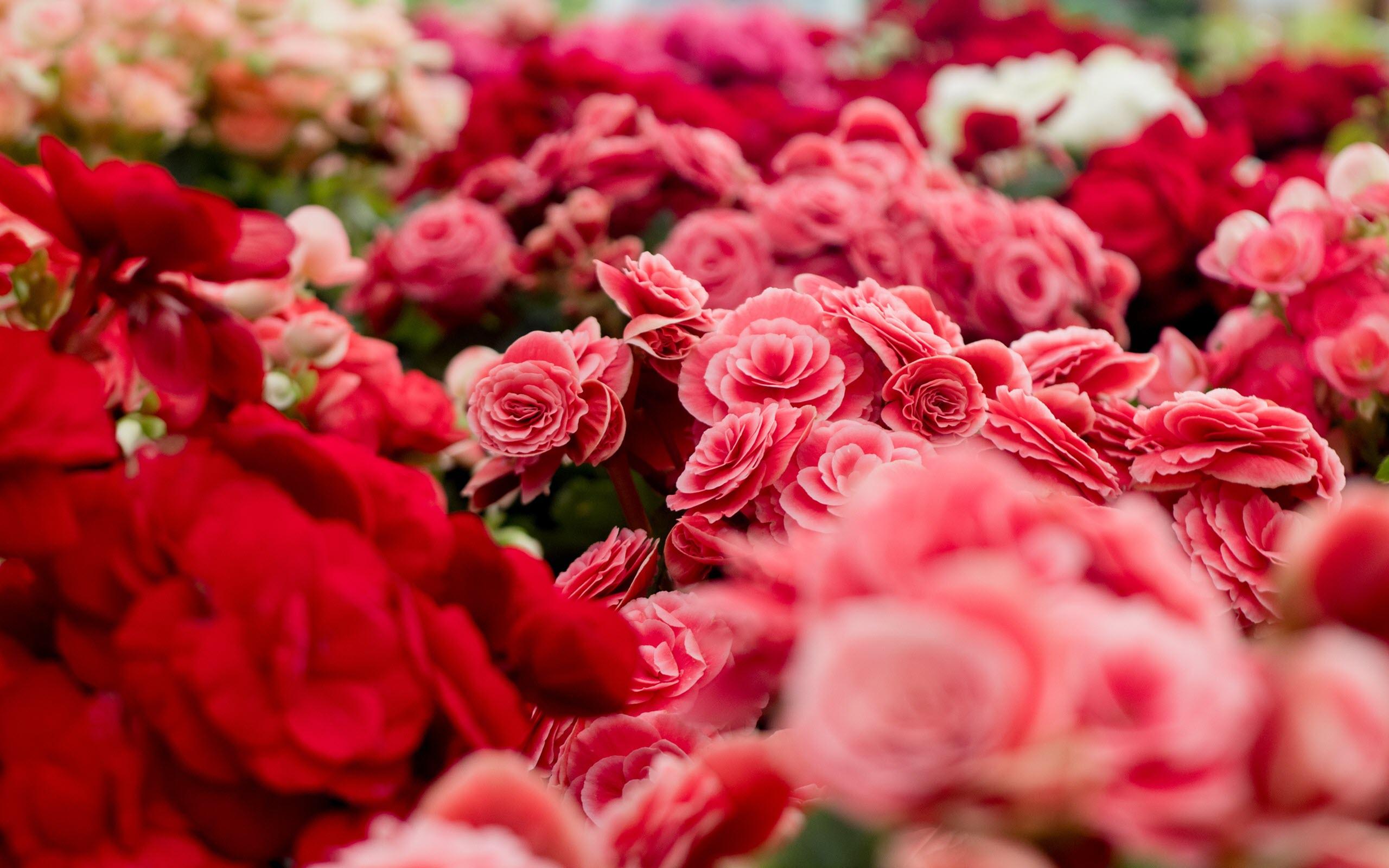 Hình nền hoa mùa xuân trong trẻo đẹp