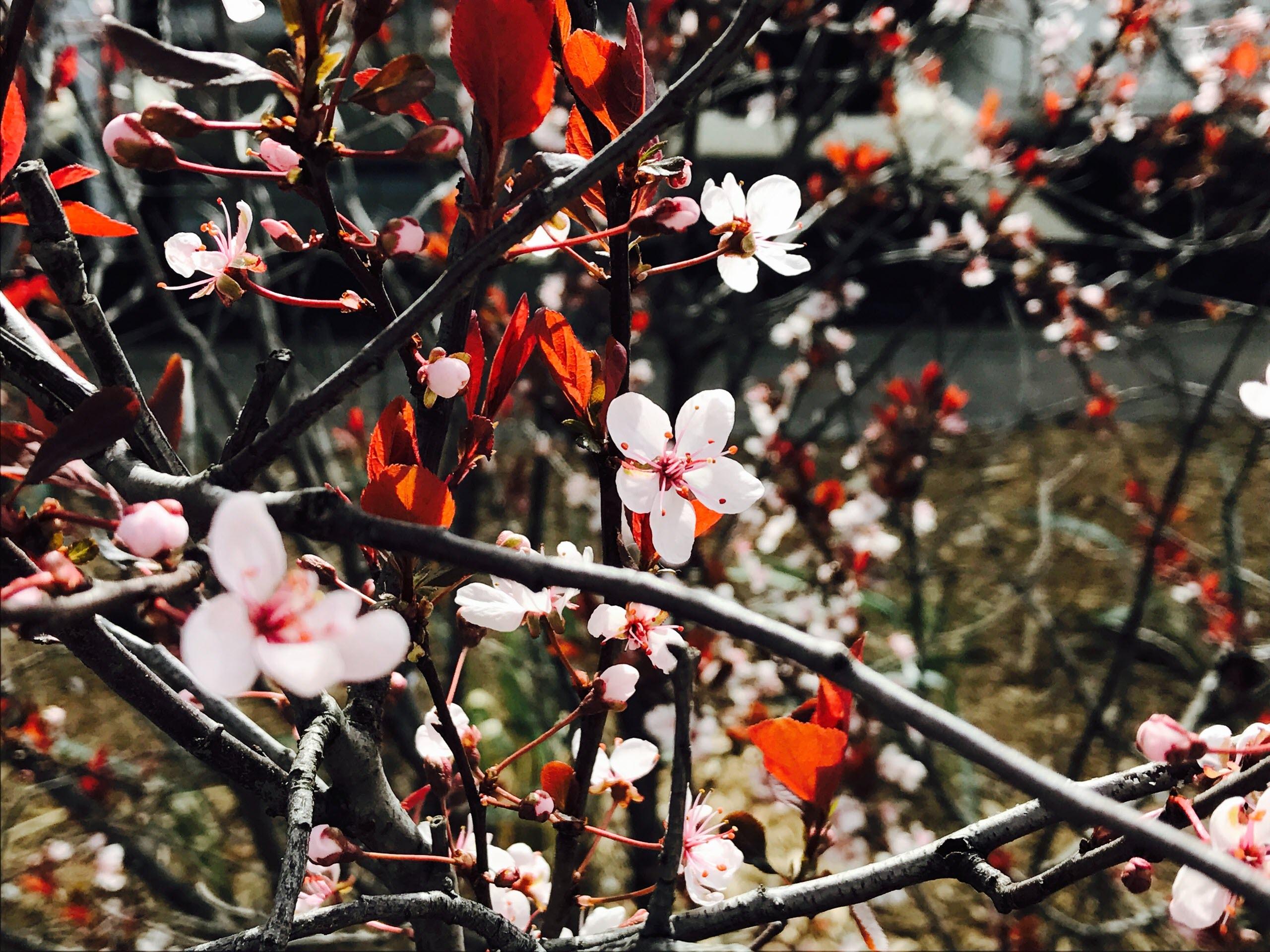 Hình nền hoa mùa xuân