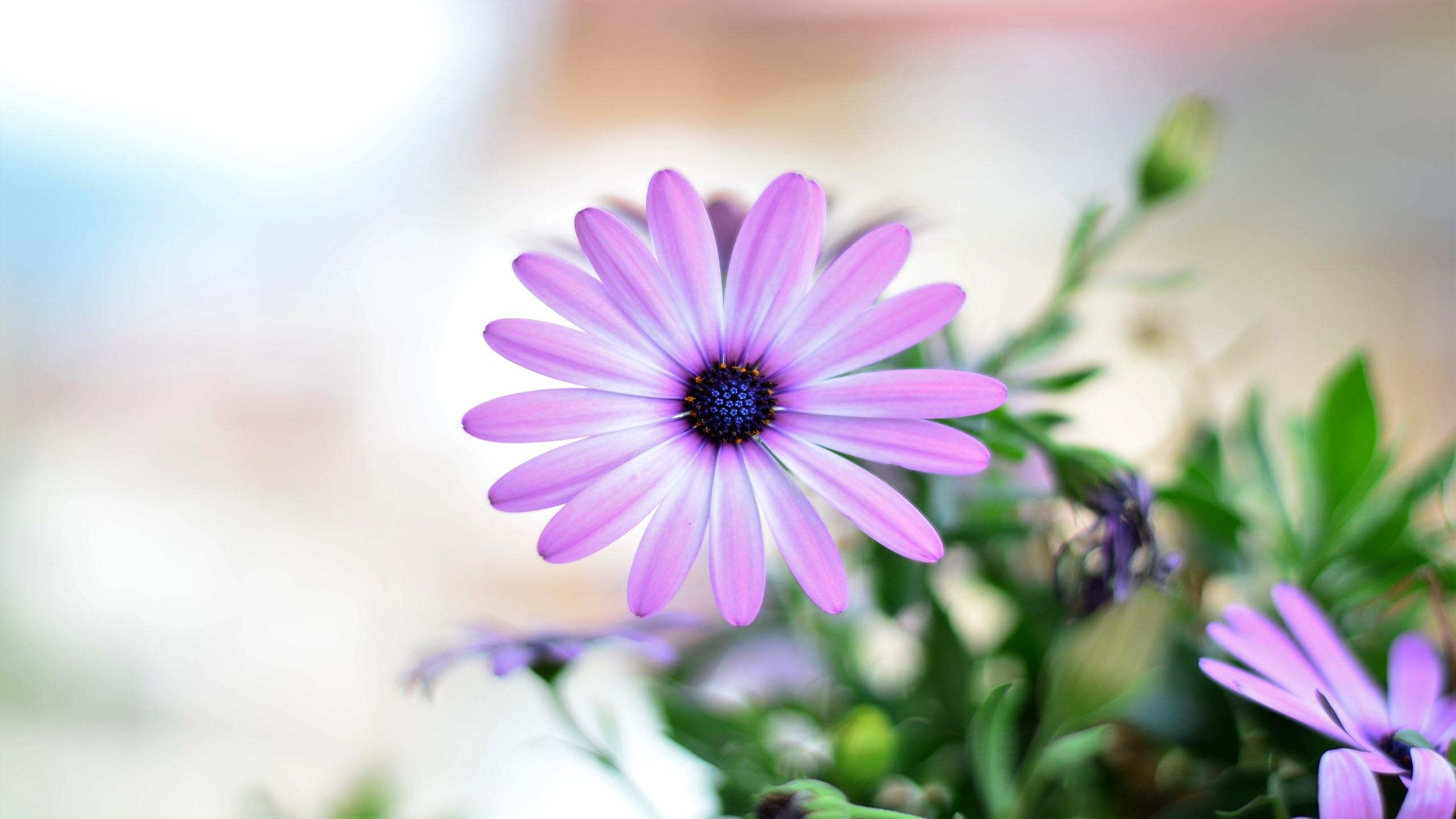 Hình nền hoa nở mùa xuân đẹp