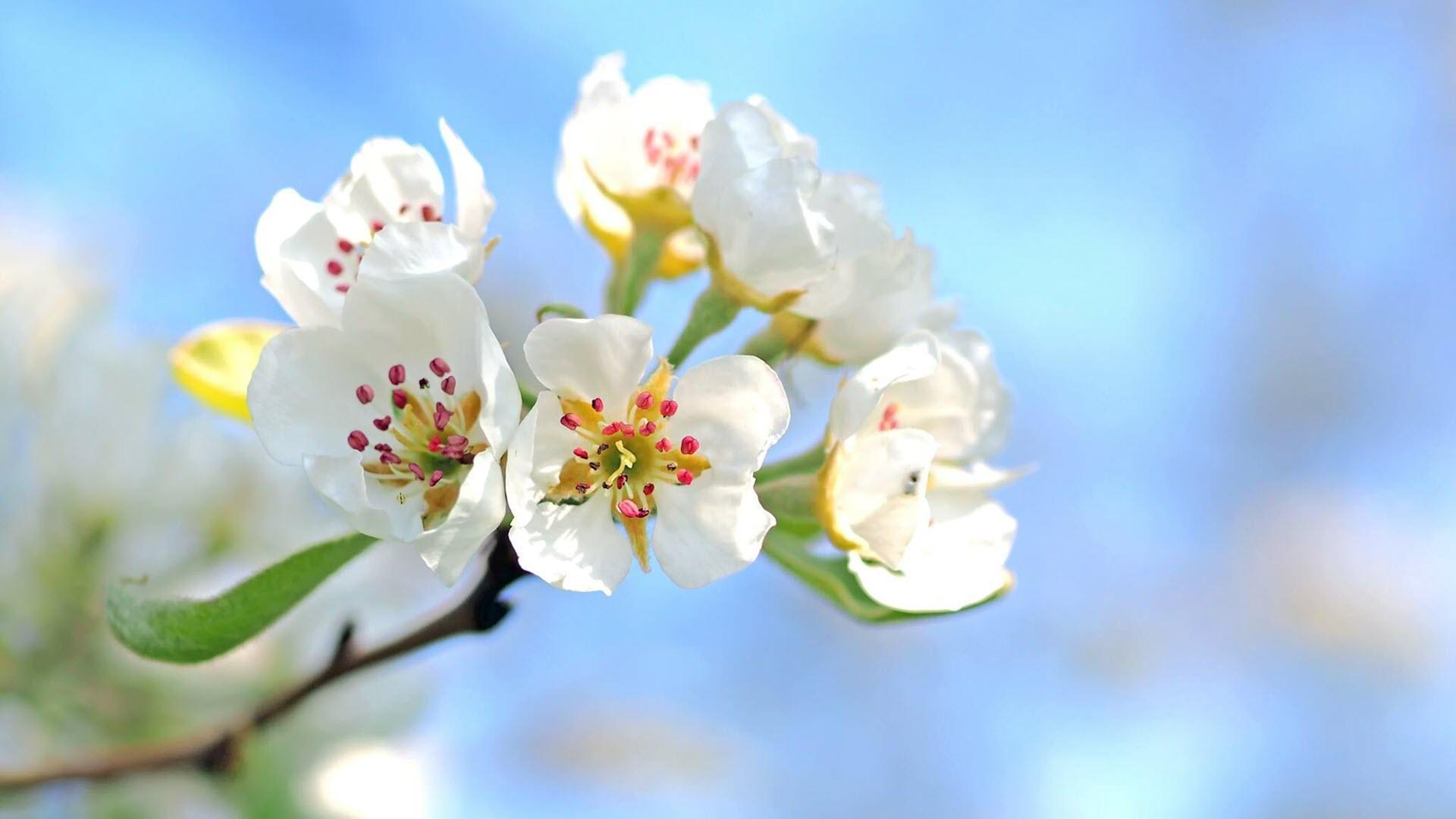 Hình nền hoa nở mùa xuân