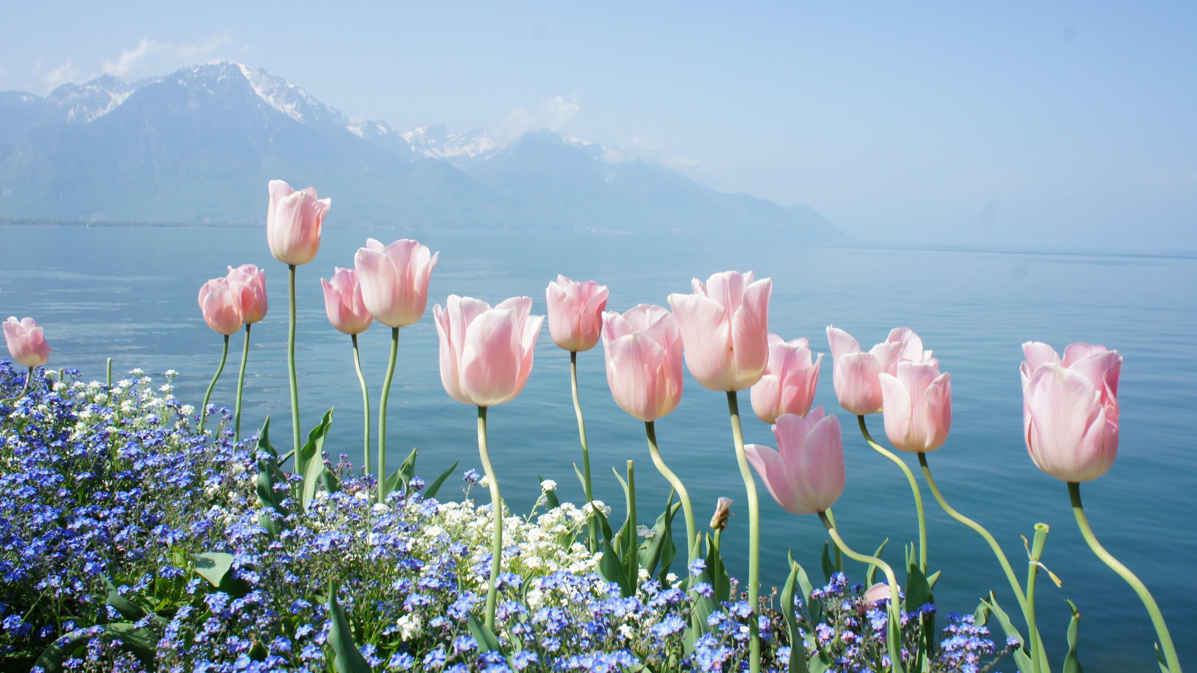 Hình nền hoa và thiên nhiên mùa xuân