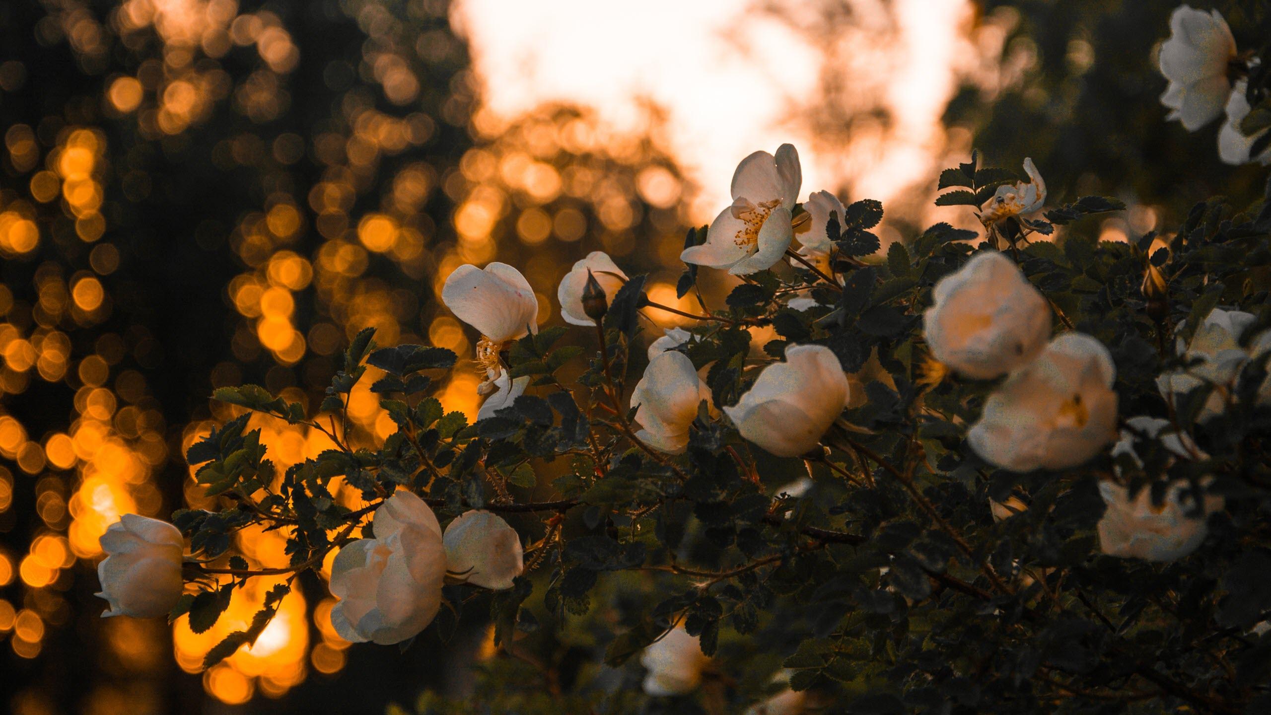 Hình nền mùa xuân đơn giản đẹp