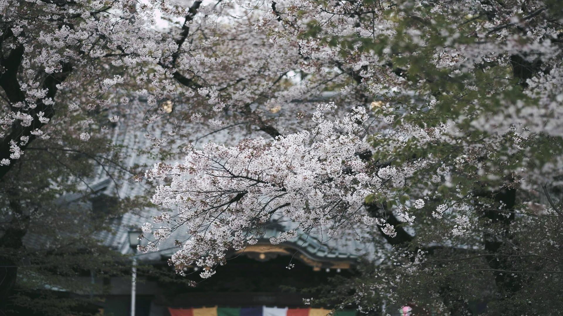 Hình nền mùa xuân đơn giản