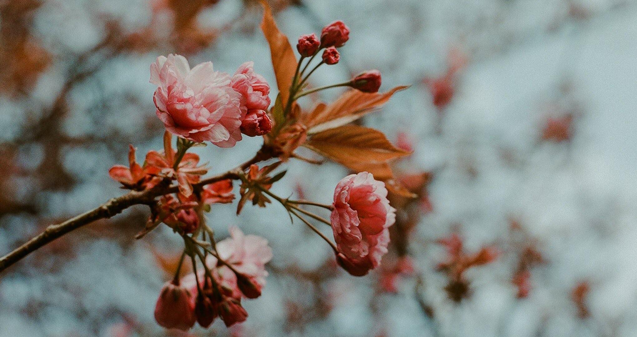 Hình nền mùa xuân nhẹ nhàng