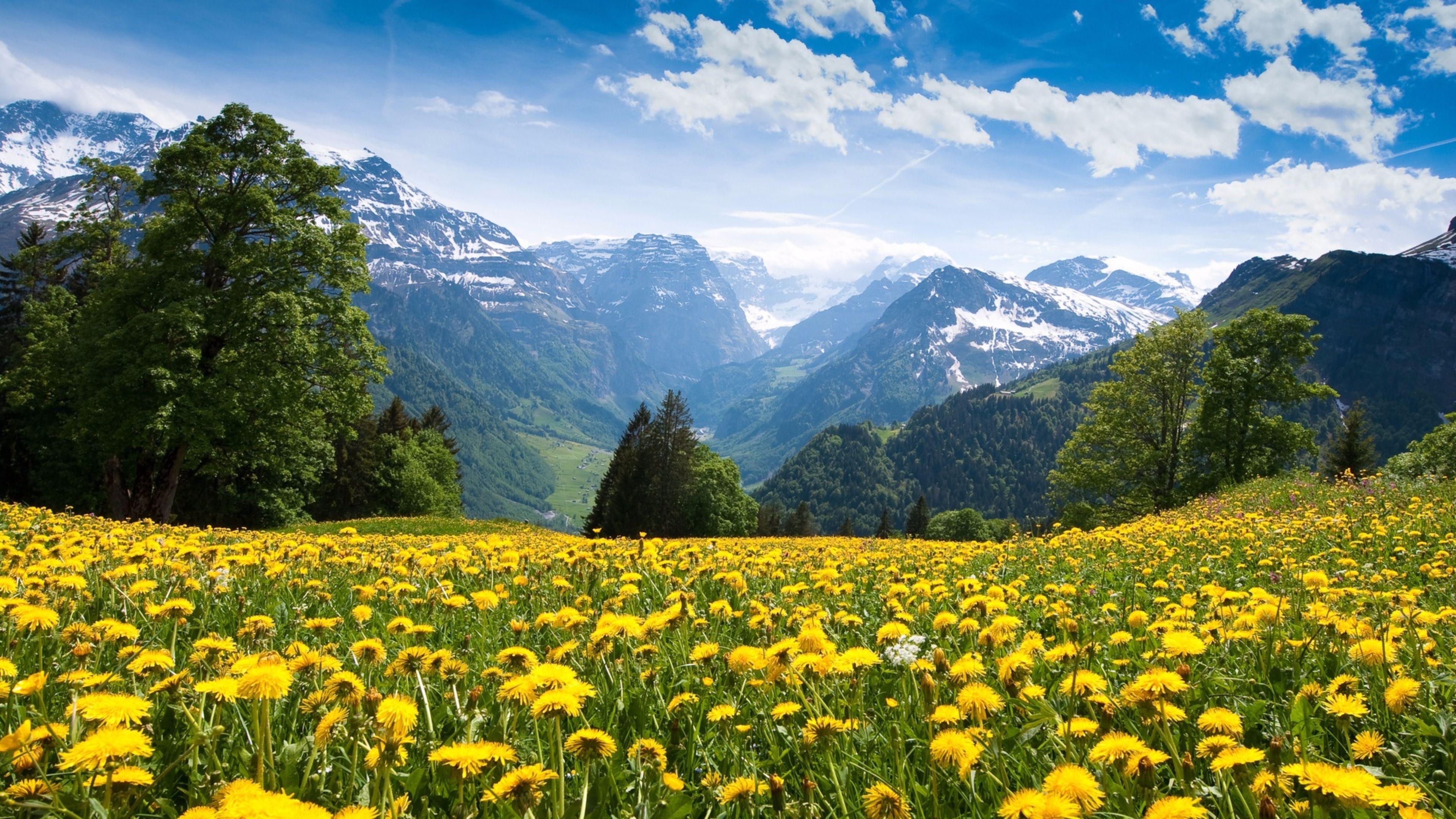 Hình nền mùa xuân trong lành đẹp nhất