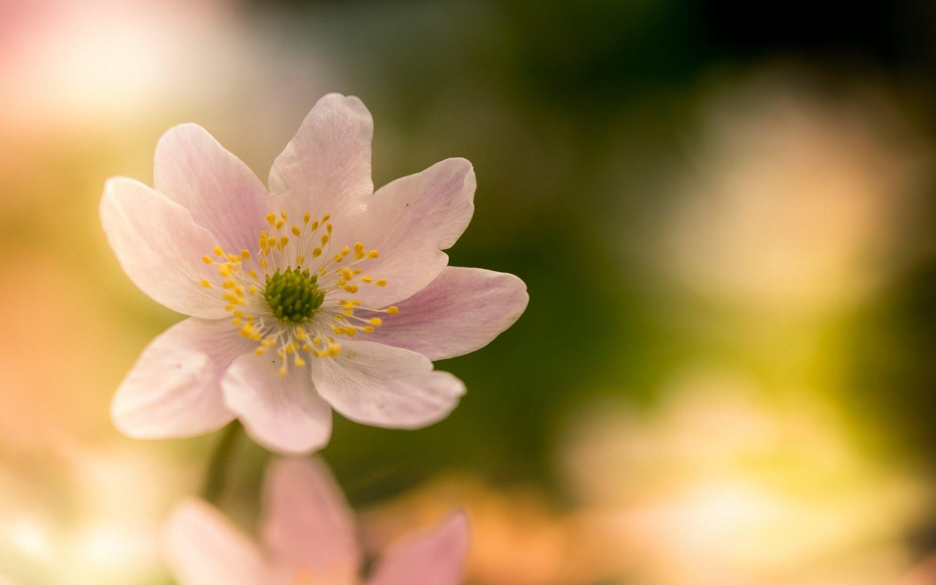 Hình nền mùa xuân trong trẻo