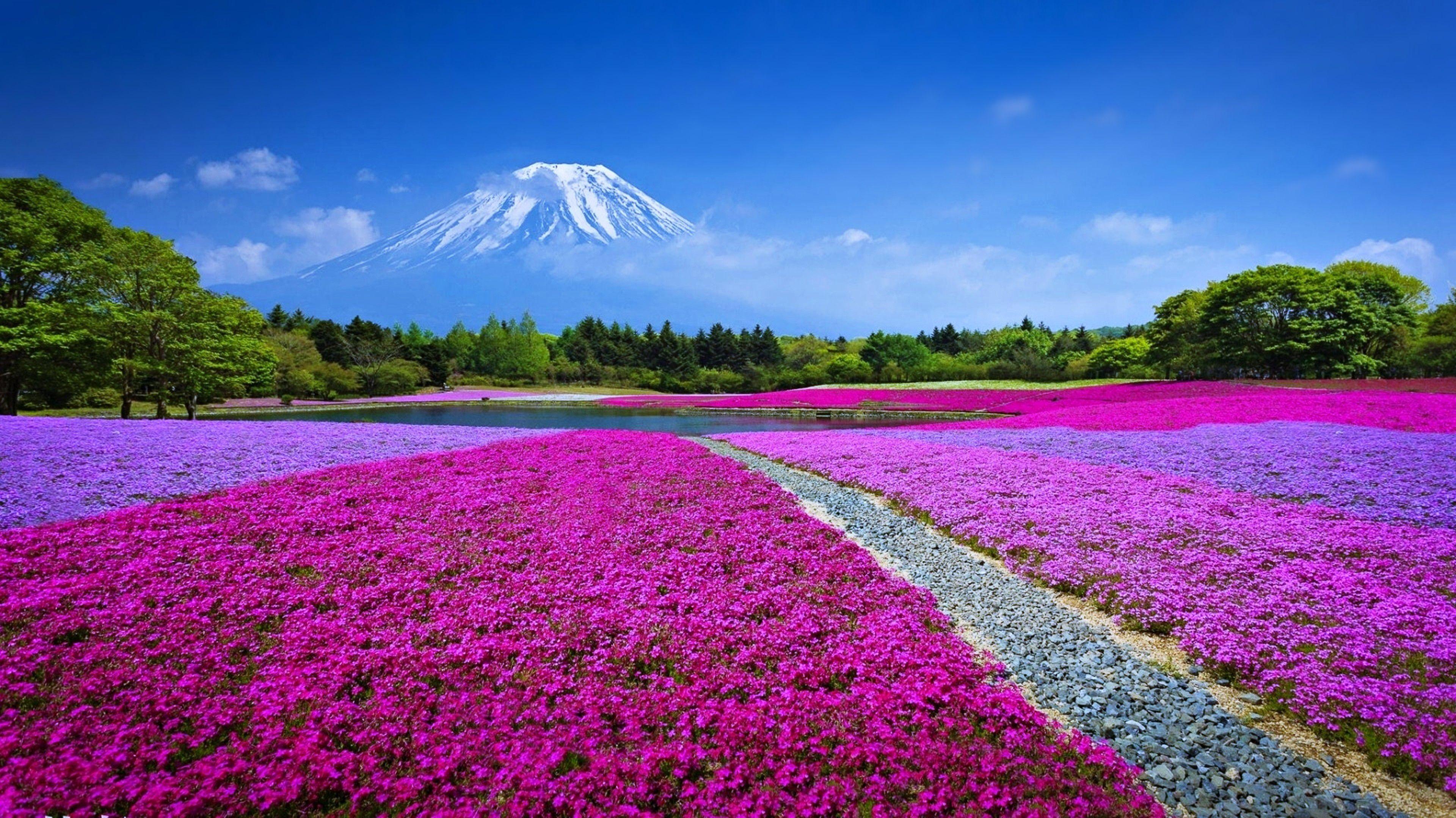 Hình nền thiên nhiên mùa xuân đẹp nhất