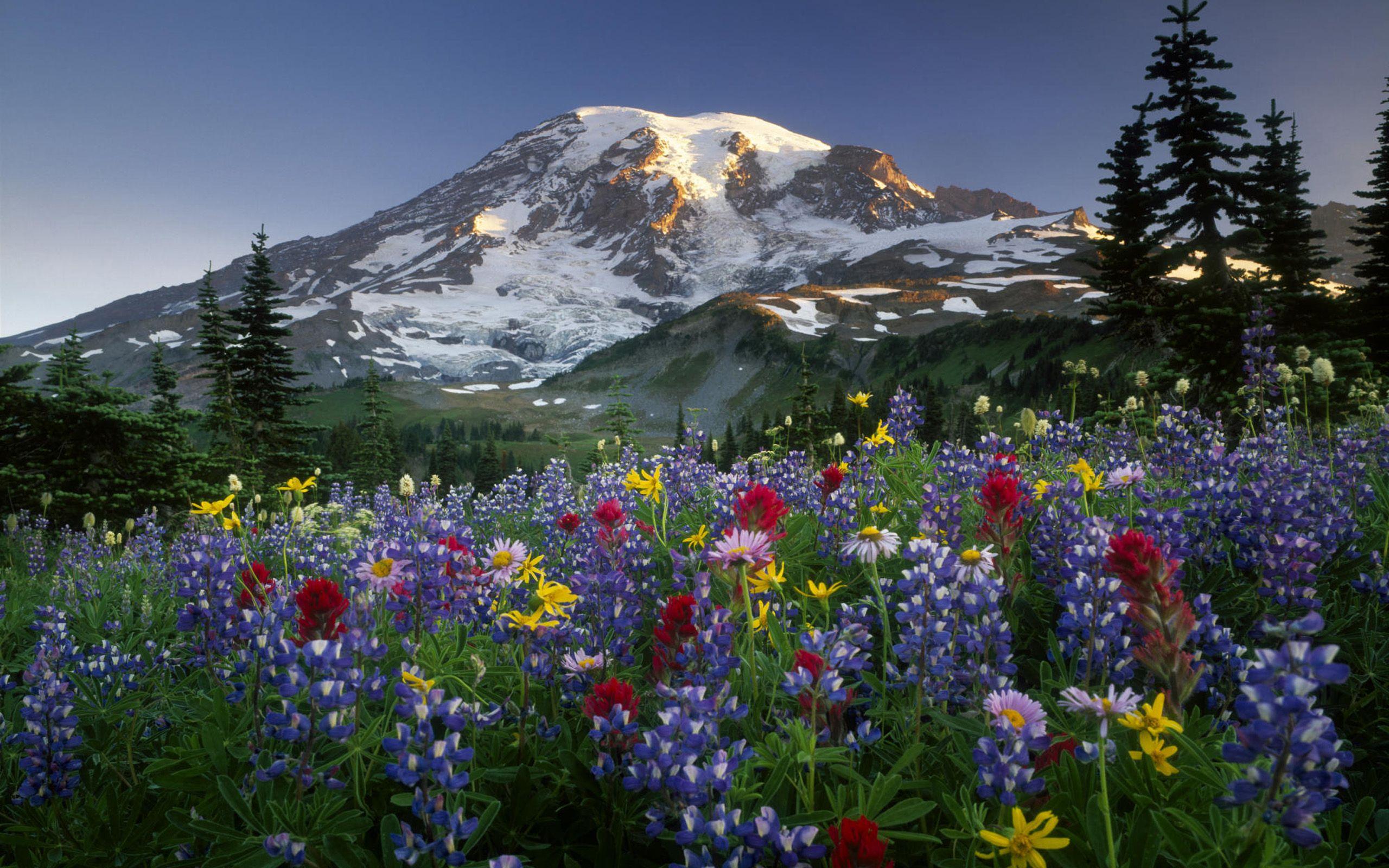 Hình nền thiên nhiên mùa xuân đẹp