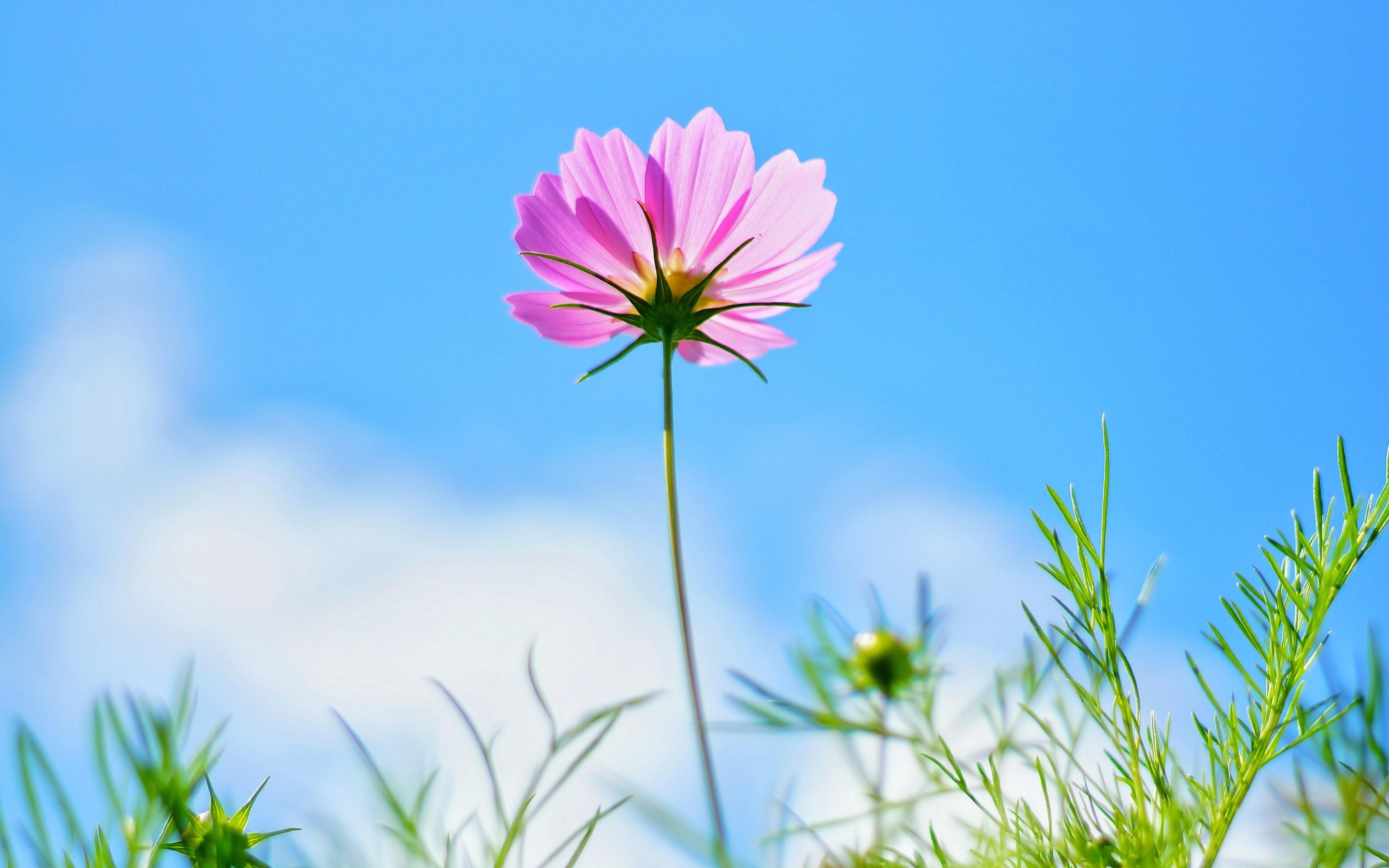 Hình nền thiên nhiên mùa xuân đơn giản