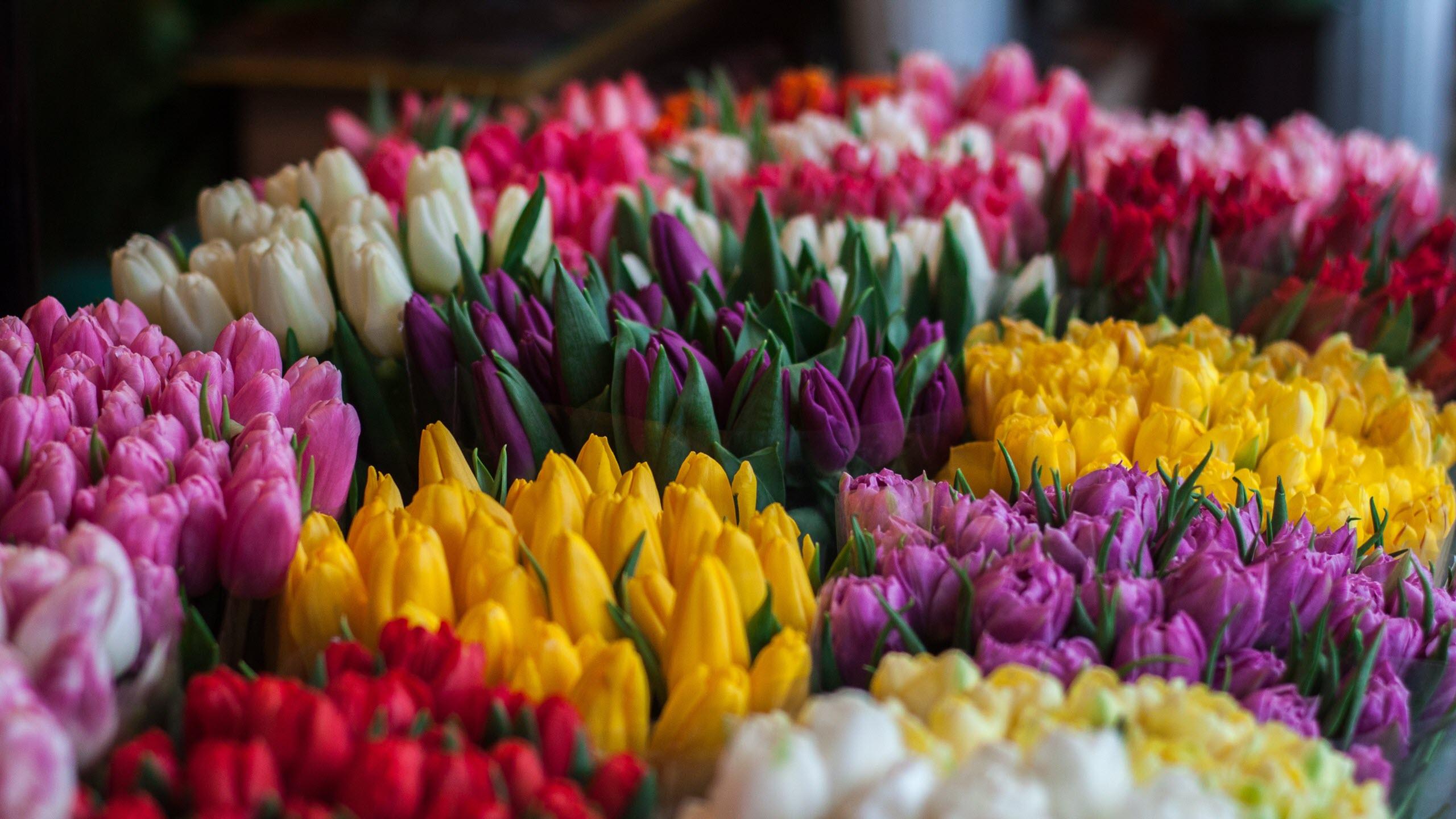Hình nền vườn hoa mùa xuân đẹp