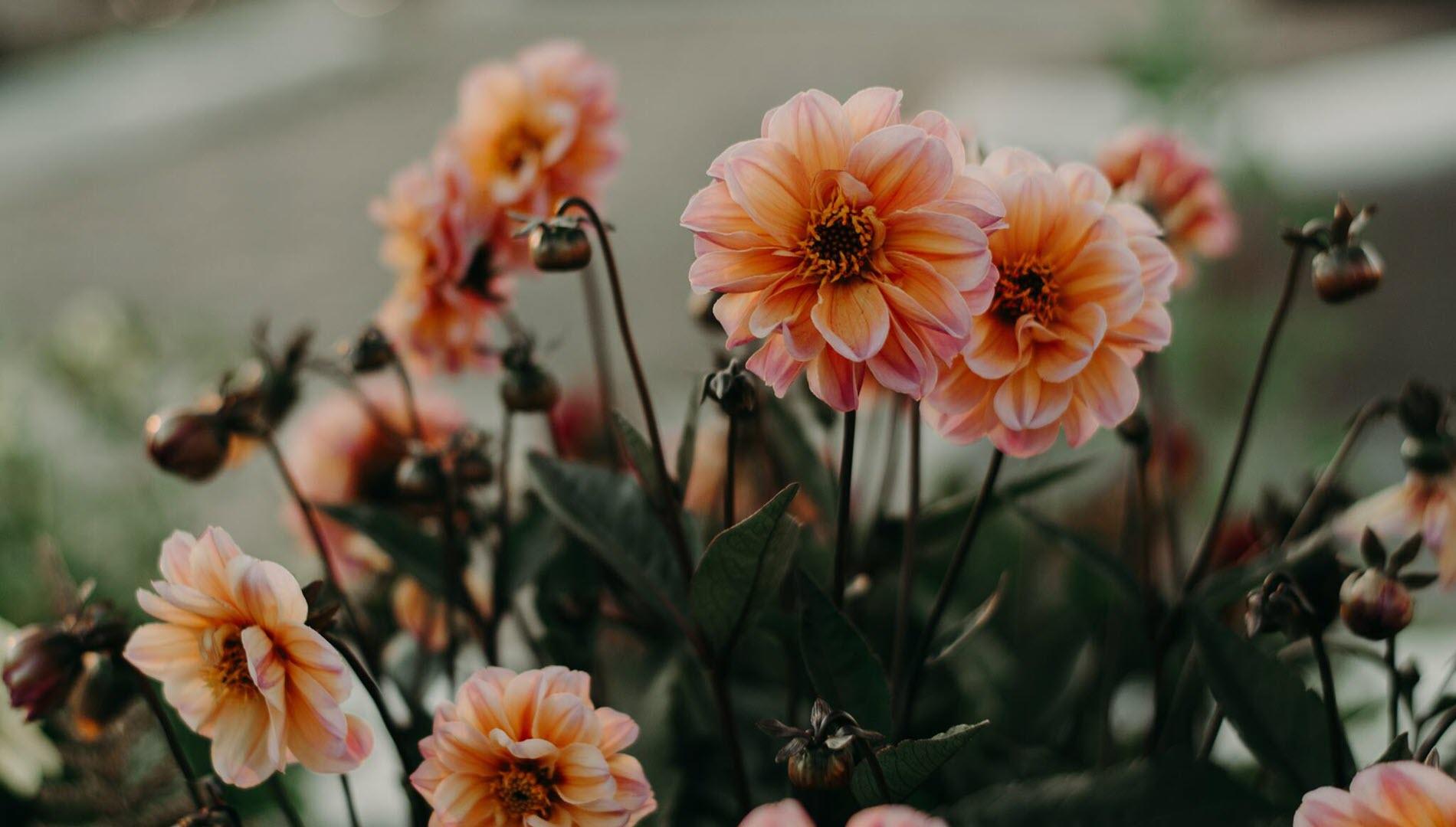 Hình nền vườn hoa mùa xuân