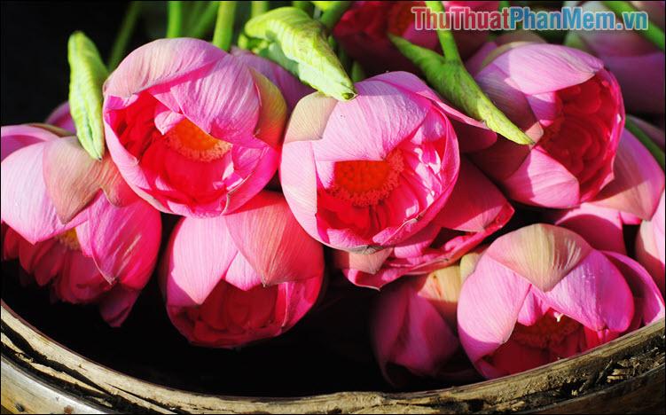 Bông hoa của trời – Trần Đức Nghĩa