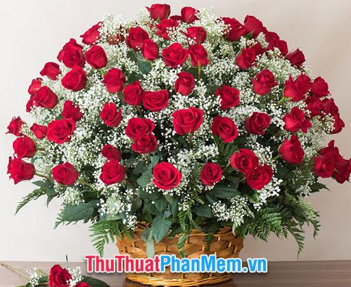 Anh trồng một vườn hoa xinh đẹp cho em, ở đó trồng đầy những bông hoa hạnh phúc, phủ đầy những ngọn cỏ xanh may mắn